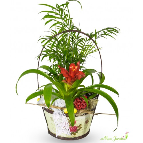 Aranjament plante naturale in cos floral